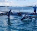 Delfines cuba