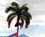 Palma y Bandera